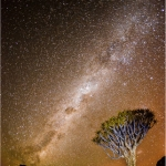QUIVER TREE UNDER THE NIGHTS SKY by Felicity Holden, Amersham
