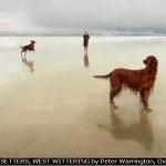 RED SETTERS, WEST WITTERING by Peter Warrington, Oxford