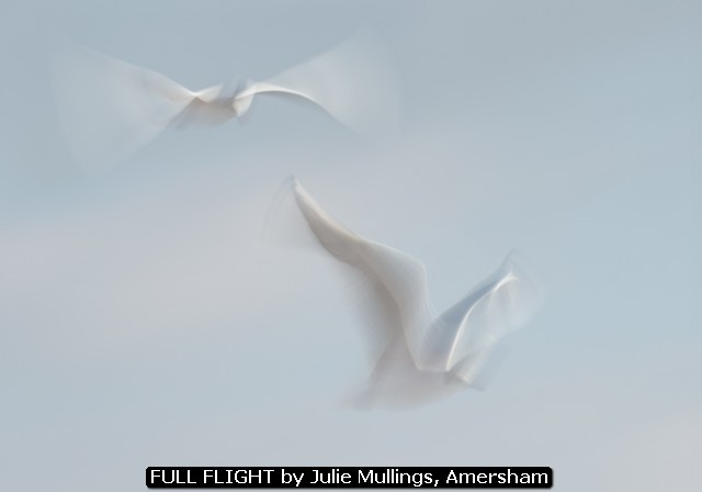 FULL FLIGHT by Julie Mullings, Amersham