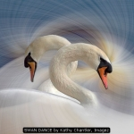 SWAN DANCE by Kathy Chantler, Imagez