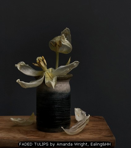 FADED TULIPS by Amanda Wright, Ealing&HH