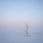 LONE TREE IN THE FOG by Julia Wainwright, Harrow