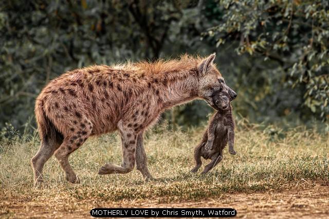 MOTHERLY LOVE by Chris Smyth, Watford